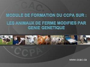 MODULE DE FORMATION DU CCPA SUR LES ANIMAUX