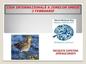 ZIUA INTERNAIONAL A ZONELOR UMEDE 2 FEBRUARIE NICOLETA