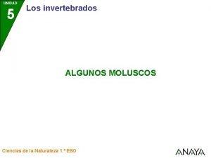 UNIDAD 5 Los invertebrados ALGUNOS MOLUSCOS Ciencias de