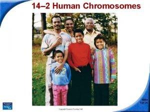 14 2 Human Chromosomes 14 2 Human Chromosomes