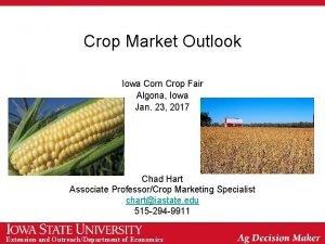 Crop Market Outlook Iowa Corn Crop Fair Algona