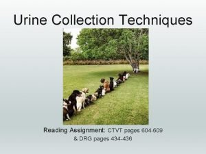 Urine Collection Techniques Reading Assignment CTVT pages 604