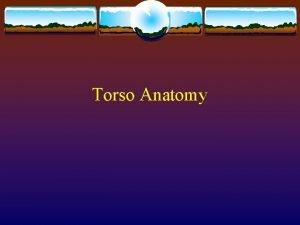 Torso Anatomy Vertebral Column Vertebral Column Cervical 7