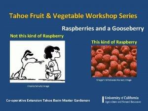 Tahoe Fruit Vegetable Workshop Series Raspberries and a
