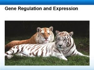 Gene Regulation and Expression Learning Objectives Describe gene