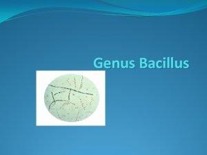 Genus Bacillus Bacillus anthracis Causative agent of anthrax