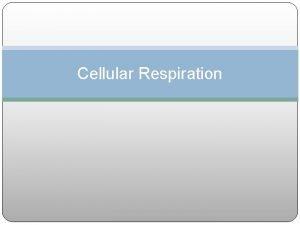 Cellular Respiration Cellular respiration process in which mitochondria