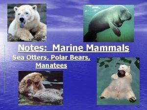 Notes Marine Mammals Sea Otters Polar Bears Manatees