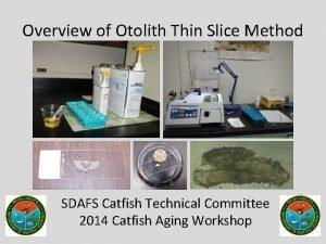Overview of Otolith Thin Slice Method SDAFS Catfish