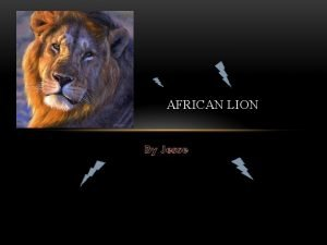 AFRICAN LION By Jesse AFRICAN LION The African