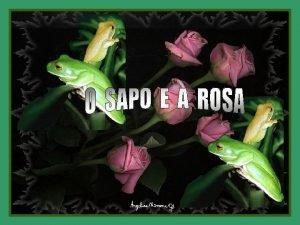 Era uma vez uma rosa muito bonita que