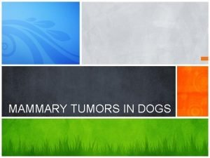 MAMMARY TUMORS IN DOGS Originate in the mammary