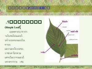 2 2 Pinnately compound leaf rachis rachis pinnate