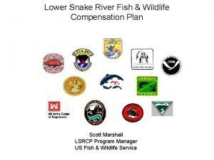Lower Snake River Fish Wildlife Compensation Plan Scott