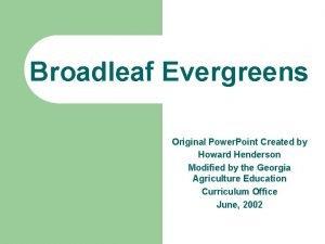 Broadleaf Evergreens Original Power Point Created by Howard