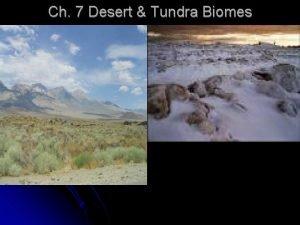 Ch 7 Desert Tundra Biomes Bellringer 39 1