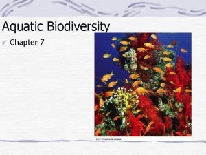 Aquatic Biodiversity Chapter 7 Coral Reefs Structure that