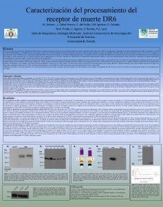 Caracterizacin del procesamiento del receptor de muerte DR