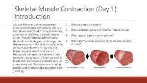Skeletal Muscle Contraction Day 1 Introduction Muscle fibers