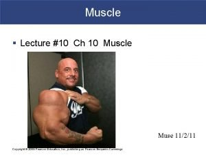 Muscle Lecture 10 Ch 10 Muscle Muse 11211