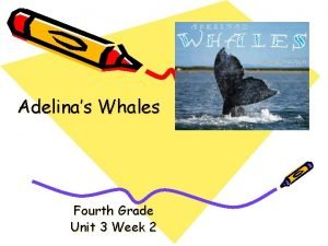 Adelinas Whales Fourth Grade Unit 3 Week 2