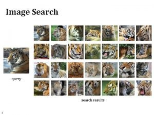 Image Search query search results 1 Image Search