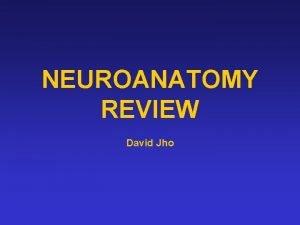 NEUROANATOMY REVIEW David Jho CEREBRAL CTX BRODMANNS AREAS