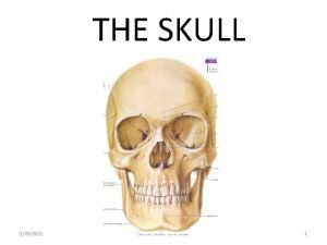 THE SKULL 2202021 SCNM ANAT 604 Skull 1