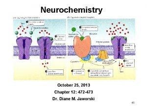 Neurochemistry October 25 2013 Chapter 12 472 473