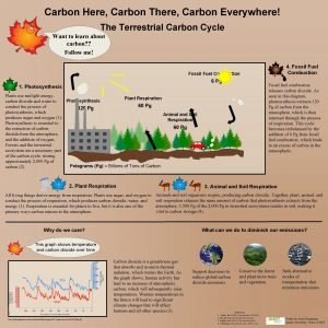 Carbon Here Carbon There Carbon Everywhere The Terrestrial