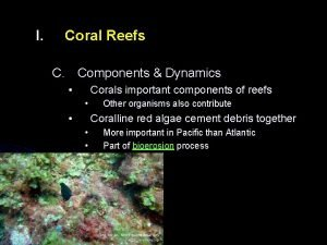 I Coral Reefs C Components Dynamics Corals important
