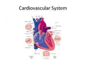 Cardiovascular System Cardiovascular System Introduction Cardiovascular system delivers