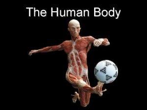 The Human Body The Human Body The Human