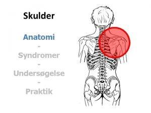 Skulder Anatomi Syndromer Undersgelse Praktik Dorsale muskler M