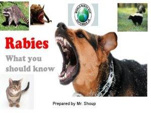 Prepared by Mr Shoup Rabies Rabies is a
