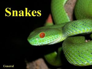 Snakes General Five general topics Definition of snakes
