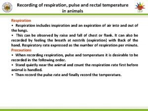 Recording of respiration pulse and rectal temperature in