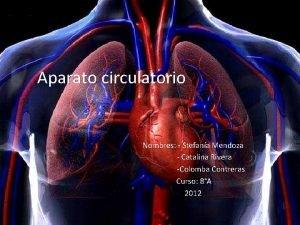 Aparato circulatorio Nombres Stefana Mendoza Catalina Rivera Colomba