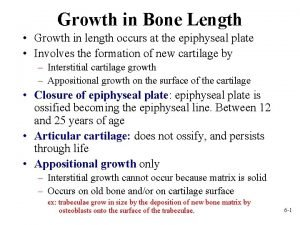 Growth in Bone Length Growth in length occurs