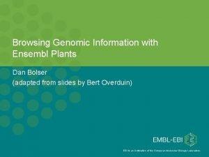 Browsing Genomic Information with Ensembl Plants Dan Bolser