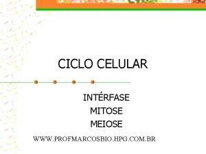 CICLO CELULAR INTRFASE MITOSE MEIOSE WWW PROFMARCOSBIO HPG