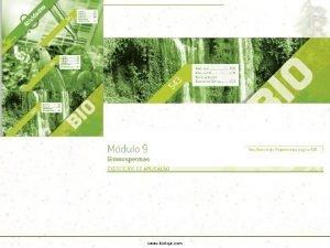 www bioloja com BOT NICA GIMNOSPERMAS A Diversidade
