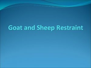 Goat and Sheep Restraint Sheep restraint Sheep are