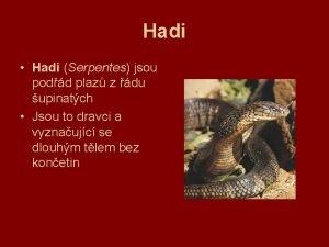 Hadi Hadi Serpentes jsou podd plaz z du