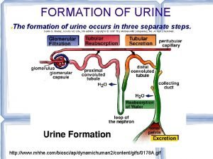 FORMATION OF URINE The formation of urine occurs