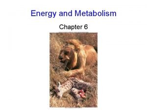 Energy and Metabolism Chapter 6 Flow of Energy
