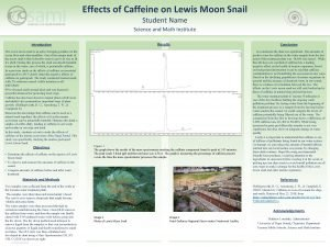 Effects of Caffeine on Lewis Moon Snail Student