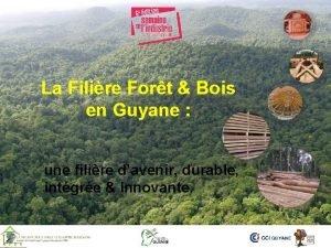La Filire Fort Bois en Guyane une filire