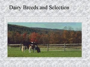 Dairy Breeds and Selection Dairy Breeds and Selection