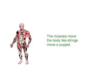 The muscles move the body like strings move